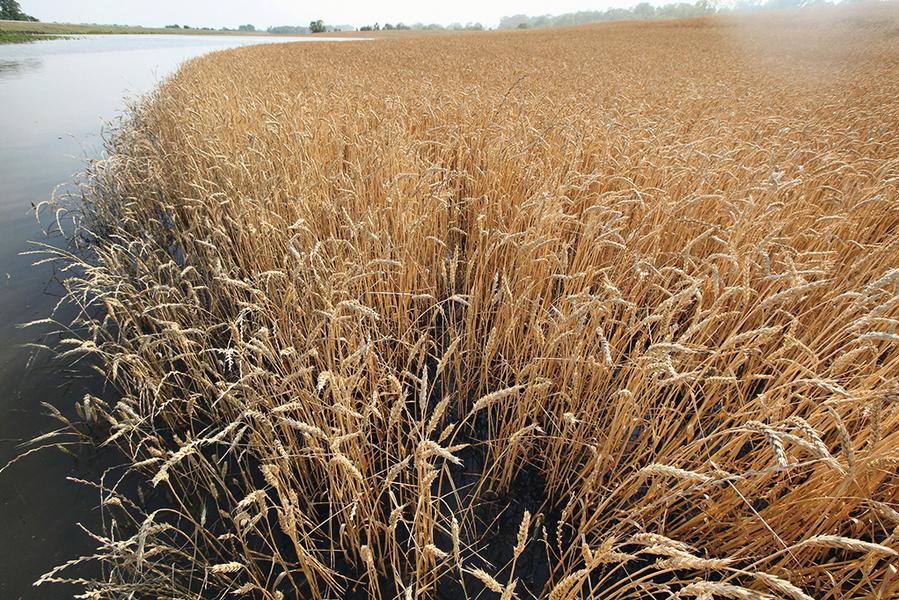 全球食品價格漲7%  忌廉和小麥最剽悍