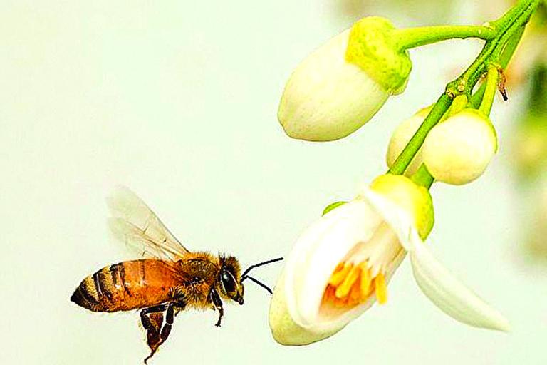 蜜蜂高效的視覺系統是人類和機器所不及的。