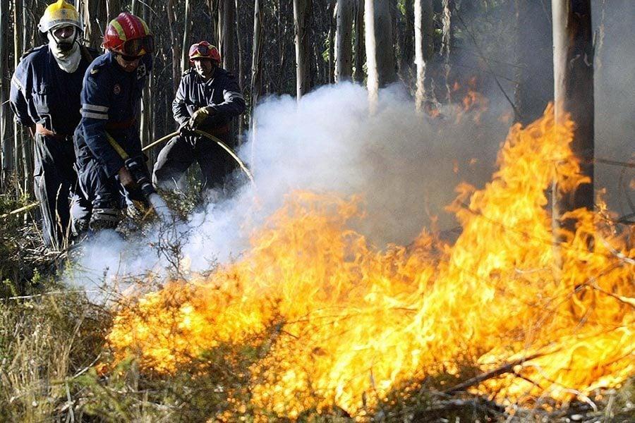 十年來最嚴重山火 加卑詩省進入緊急狀態