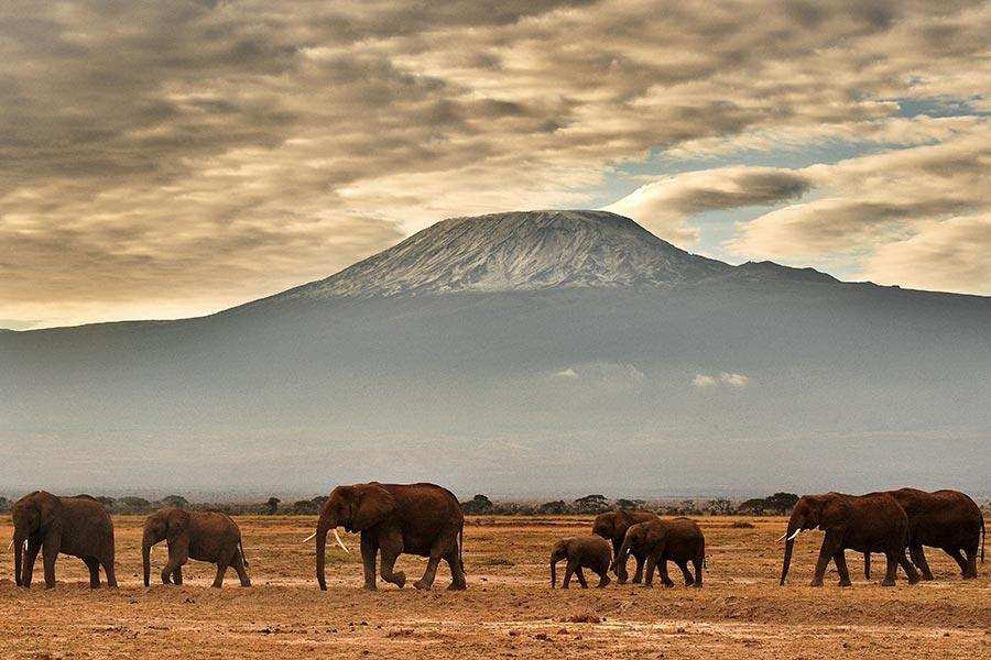 科學家警告說,地球正在進入第六次生物大滅絕時代,也就是說,將有四分之三的物種可能在未來幾個世紀消失。圖為肯雅安博塞利國家公園內的野生象群。(CARL DE SOUZA/AFP/Getty Images)