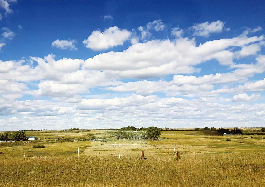 加拿大150周年之平原省篇 風吹草低見牛羊