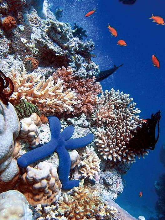 大堡礁海底的景象。(取自維基百科)
