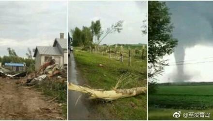 強勁龍捲風將大樹連根拔起。(網絡圖片)