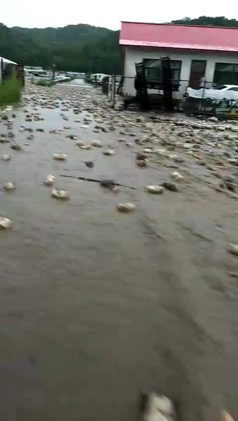 村民種植的木耳菌袋全部被大水沖走,損失慘重。(網絡圖片)