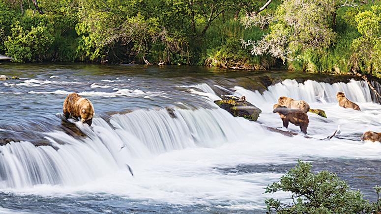 阿拉斯加卡特邁國家公園棕熊在瀑布上等待鮭魚跳起。(Christoph Strässler/Flickr)