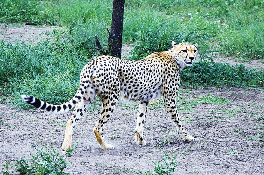 研究:中等體型動物速度最快