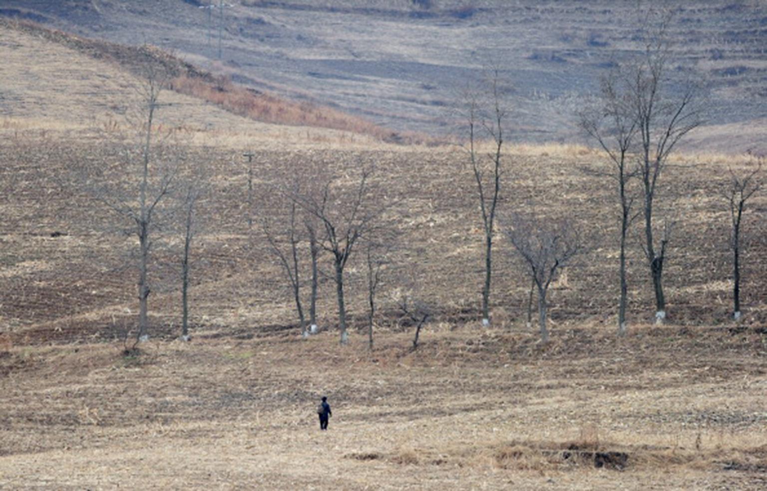 聯合國糧農組織(FAO)上周表示,北韓今年春耕季節出現自2001年以來最嚴重的乾旱,預料今年稻米、粟米等主要糧食將嚴重歉收。(Getty Images)