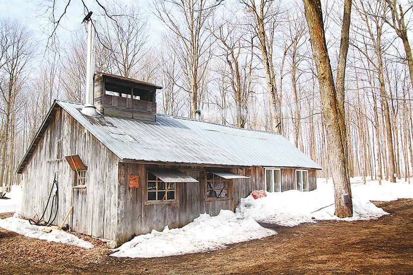 出產楓糖漿的楓糖小屋。(Fotolia)