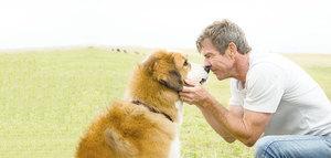 輪迴題材展新意 《再見亦是狗朋友》感動人心