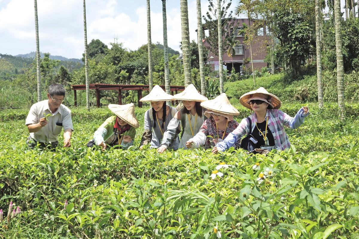社前茶是指春社日祭祀土神前採摘的茶。(廖素貞/大紀元)