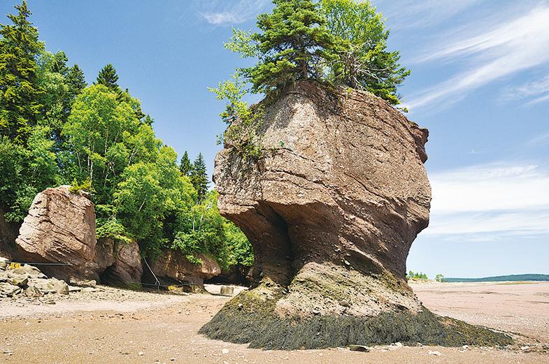 芬迪國家公園內的海岸邊奇石聳立。(Fotolia)