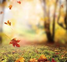 暑氣未消 立秋養生以潤肺為先