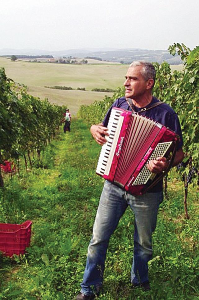意大利葡萄園主人奇紐齊(Carlo Cignozzi)為葡萄拉手風琴。(法拉奇娜天堂葡萄園提供)