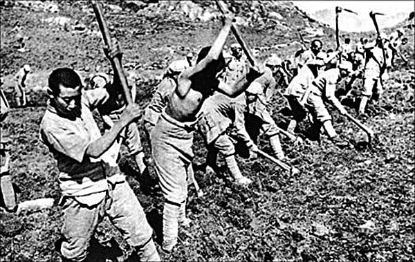 中共命令八路軍三五九旅進駐南泥灣,種植大片鴉片。( 網絡圖片)