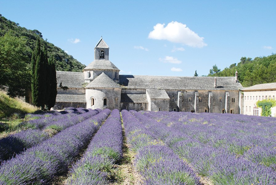 薰衣草花開  法國普羅旺斯遍野飄香