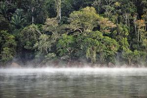 新發現 亞馬遜雨林會自己造雨