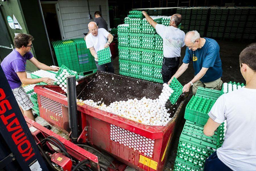 殺蟲劑雞蛋風波蔓延 英超市下架受污染食品