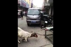 網絡流傳吉林一懷孕母羊向屠夫下跪
