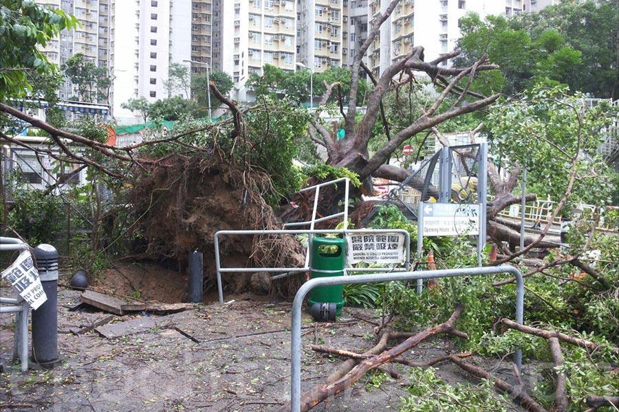 基督教聯合醫院一棵大樹早上約9時被強風吹倒,橫臥秀雅道,導致進出醫院的車路全線封閉,所有車輛未能經秀雅道前往醫院。(大紀元)