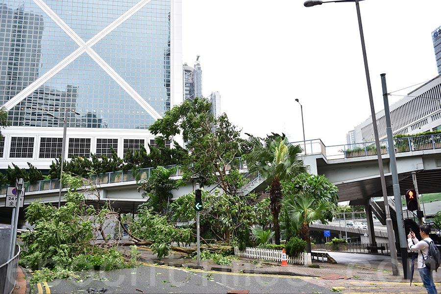 政府至今收到466宗塌樹報告、四宗水浸報告及一宗山泥傾瀉報告。(郭威利/大紀元)