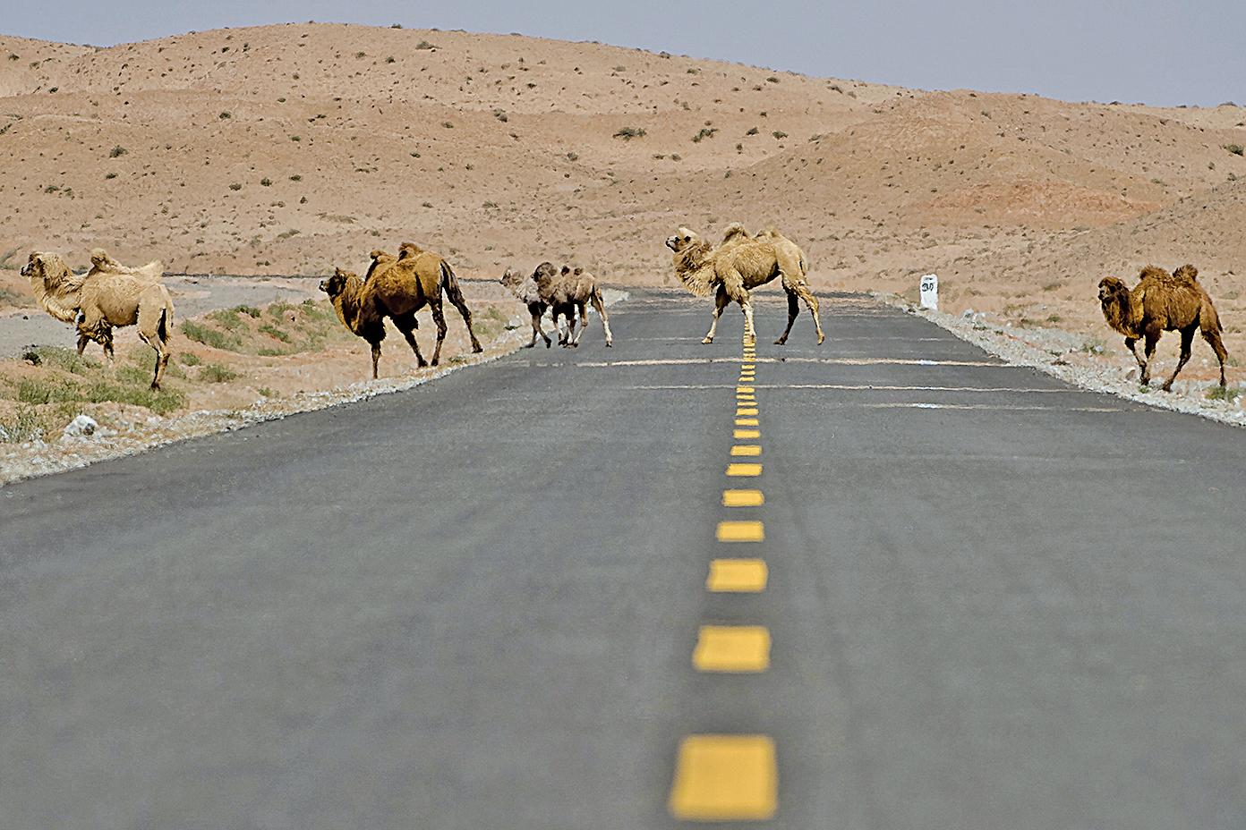 中國的新絲綢之路存在風險隱憂等多重難題。(大紀元資料室)