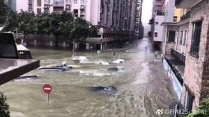 「天鴿」襲粵 江門遭重創深圳交通癱瘓