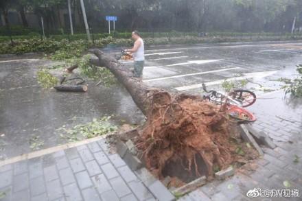 大樹被連根拔起。(網絡圖片)