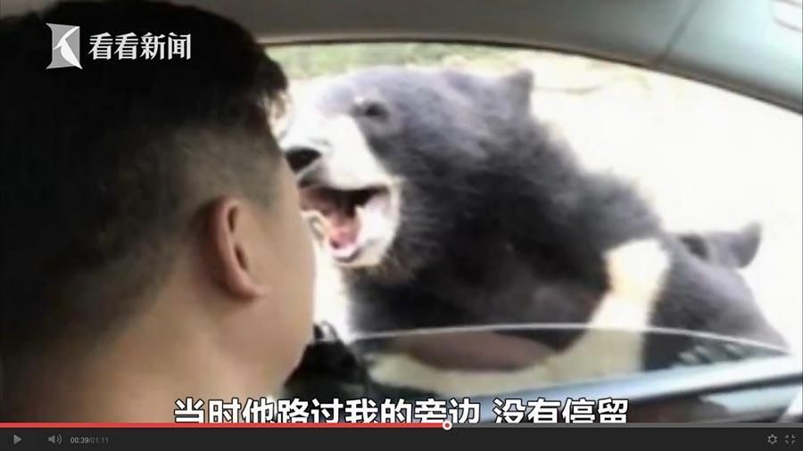 8月18日,陳先生駕車到八達嶺野生動物園遊玩時,由於他開車窗餵食,被黑熊咬了。(視像擷圖)