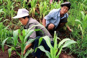乾旱加制裁 北韓民眾對金正恩感到幻滅