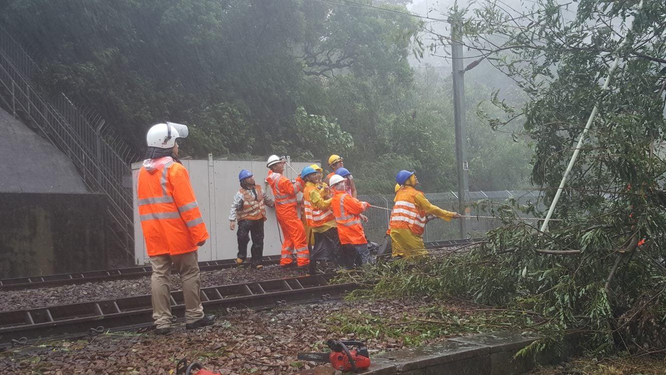今日清晨近6時許,港鐵東鐵綫大學站至大圍站之間,有大樹被吹到連根拔起,部份樹枝壓到架空電纜,港鐵派工程人員移除塌樹。(MTR facebook)