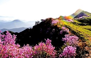 韓國慶尚南道為港天然有機展 增添傳統養生智慧