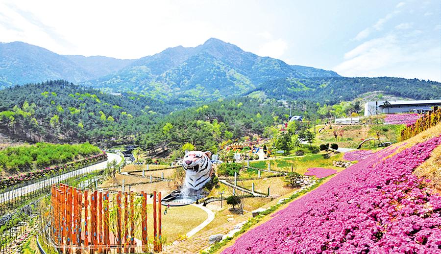 山清郡展各式韓傳統草藥保健品
