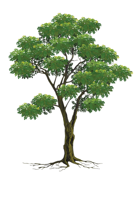 大地和古樹