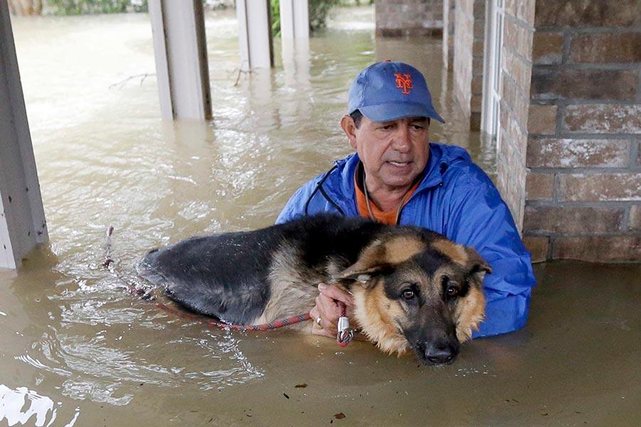 家中洪水齊腰,居民帶著寵物撤離。(加通社)
