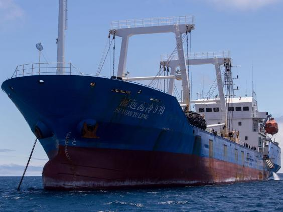 一艘中國漁船被發現捕有300噸冷凍的近滅絕或瀕危物種,包括鎚頭鯊(Hammerhead Shark),20名中國船員被厄瓜多爾判刑入監。(厄瓜多爾環境部圖片)