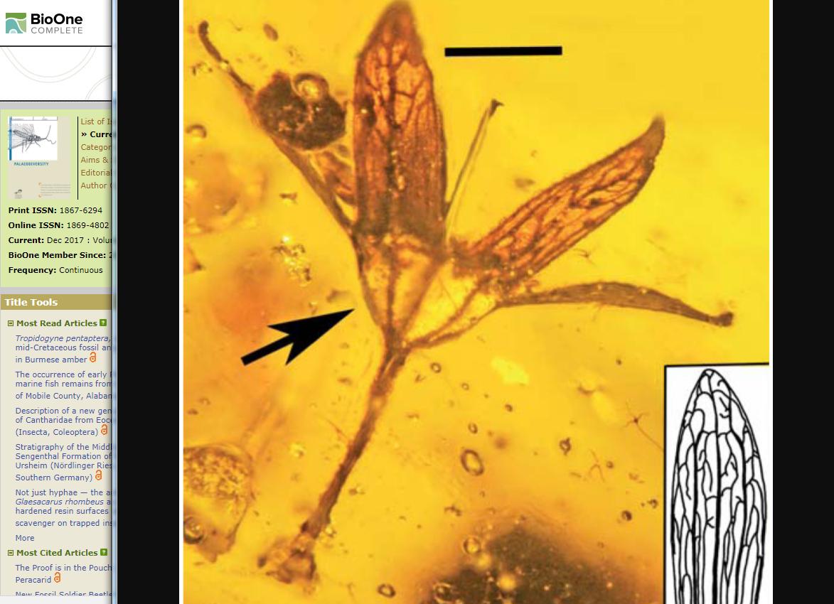 可見展開的花萼及雄蕊。(學術期刊《Palaeodiversity》網頁擷圖)