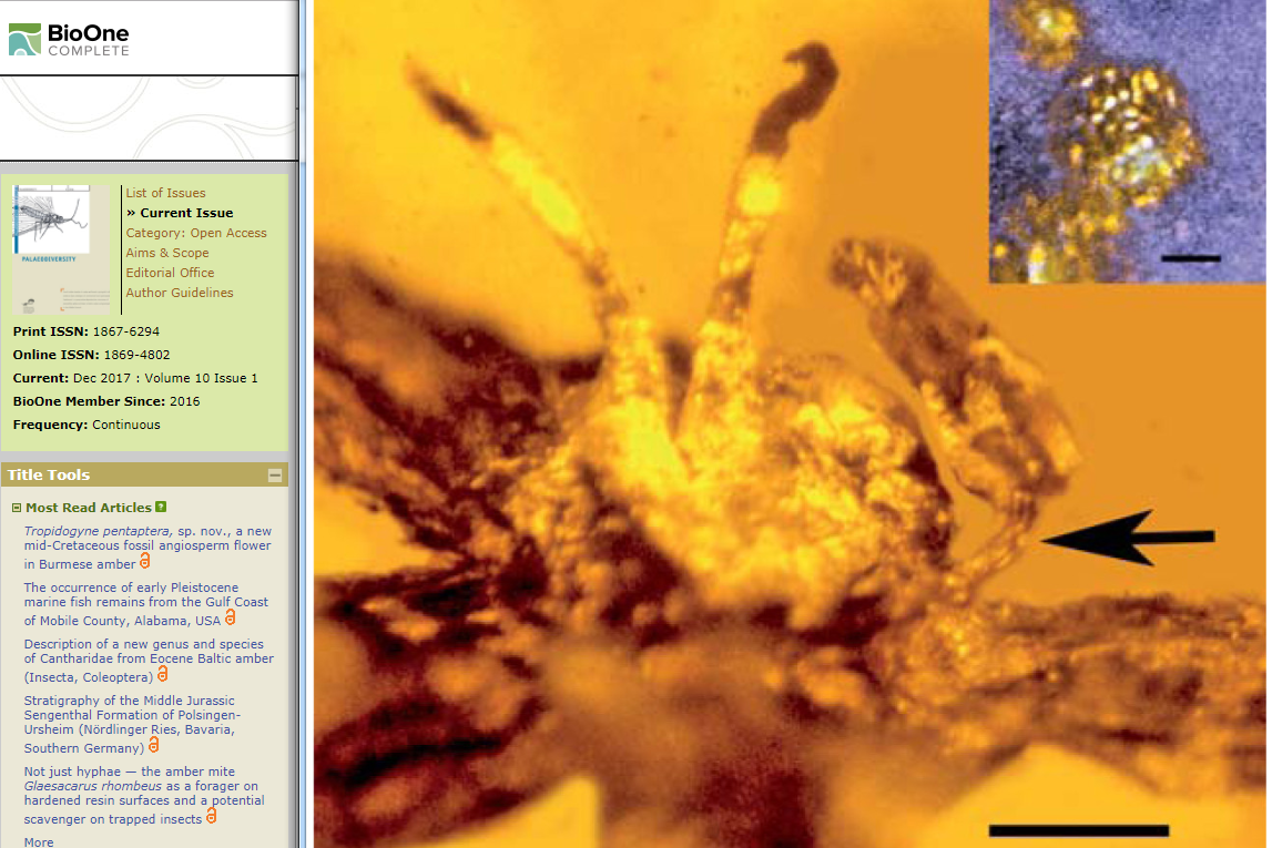 一億年前花的結構與現在的相差無幾。(學術期刊《Palaeodiversity》網頁擷圖)