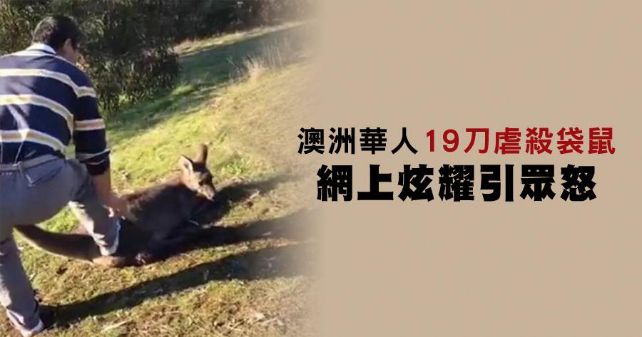 澳洲華人19刀虐殺袋鼠 網上炫耀引眾怒