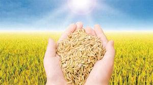 一穀補一臟 五穀是五臟養生好食材