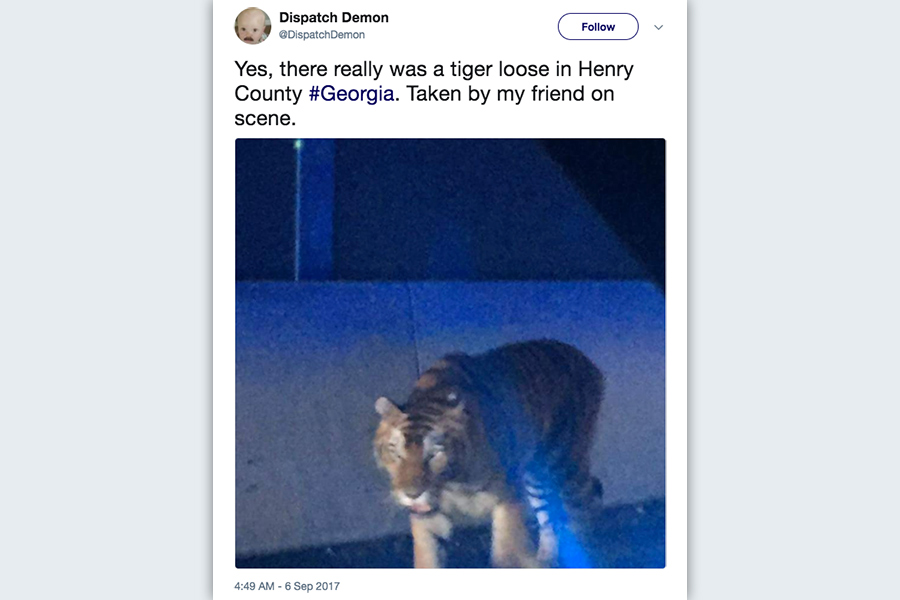 周三(9月6日)早上,美國75號高速公路在喬治亞州路段突然出現一隻老虎在漫步。(推特擷圖)