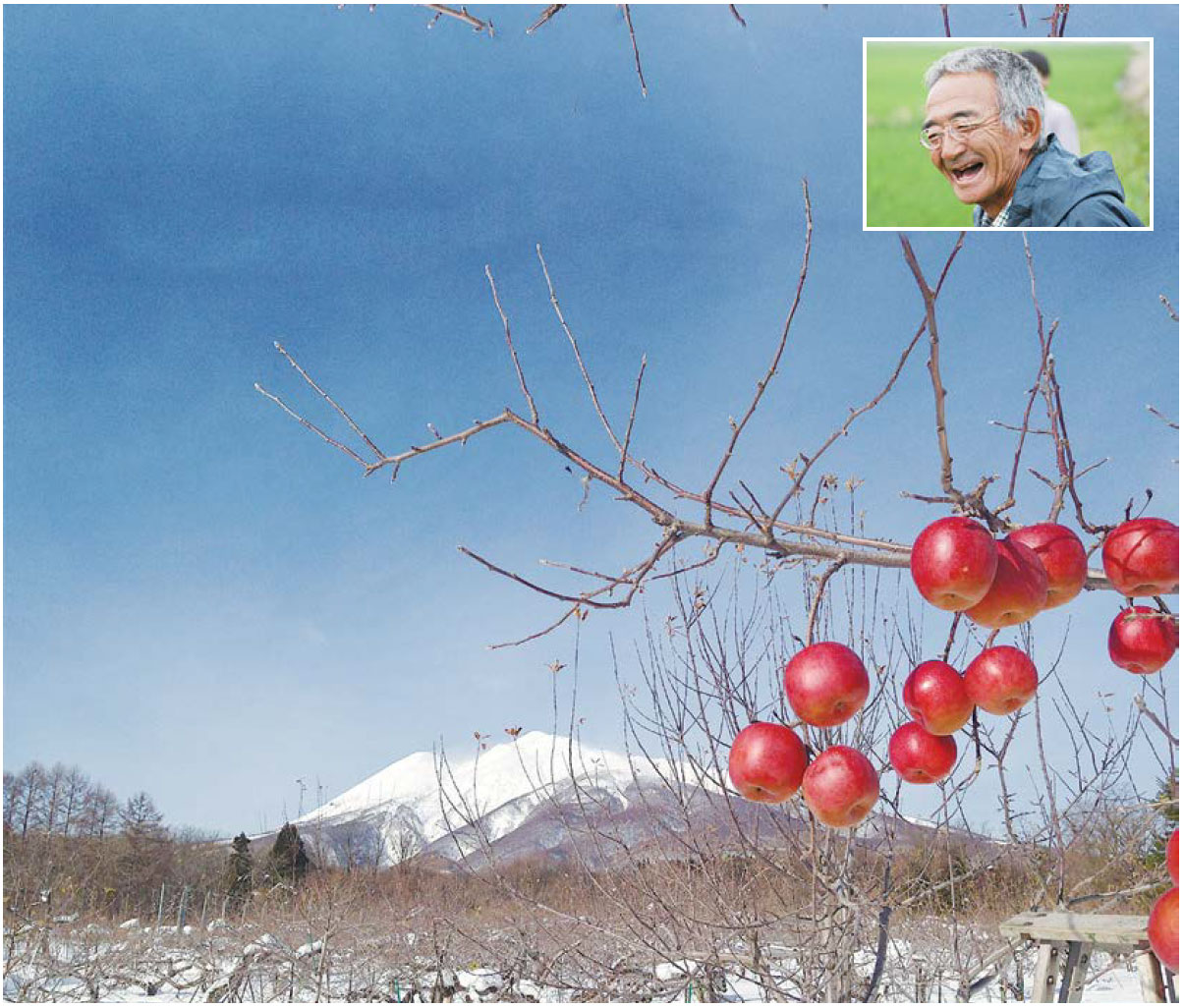 上圖:守得雲開見月明,堅持不施化肥不噴農藥種蘋果的木村秋則,在蘋果園連續11年沒有收成和收入,一家七口持續過著赤貧的生活後,木村蘋果終於面世。(http://akinori-kimura.com) 下圖:木村蘋果能抵禦寒冬酷暑,更不怕害蟲侵擾。(木村秋則臉書)