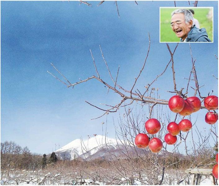 日本農夫十一年的神奇經歷和堅持