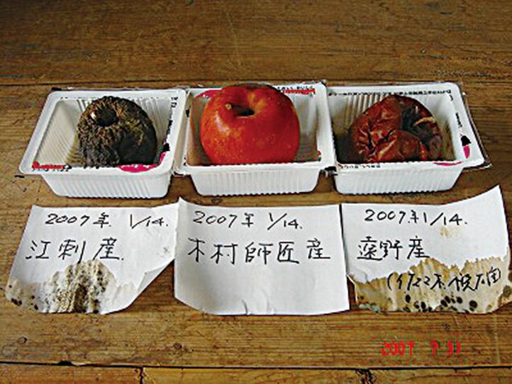 放在中間的木村蘋果放置2年不會如普通蘋果一樣腐爛,它只會枯萎變成乾果。(網絡圖片)