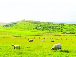 書摘:《山牧之愛》現代牧人的四季日常還有他的羊