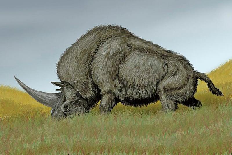 獨角獸滅絕不到3萬年