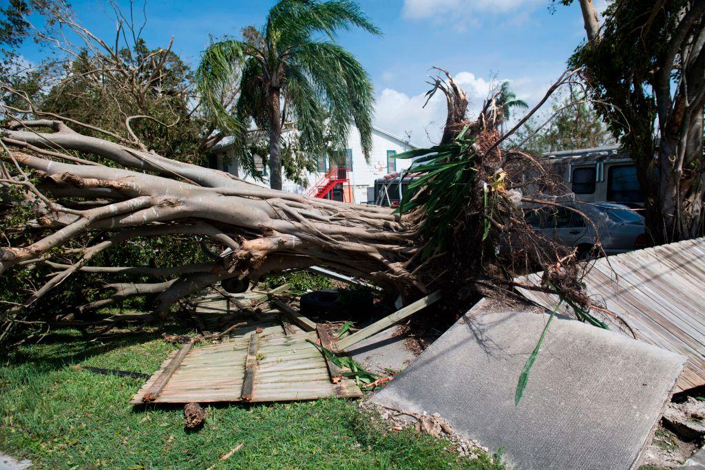 9月11日,佛羅里達州Homestead被颶風艾爾瑪連根拔起的樹。(SAUL LOEB/AFP/Getty Images)