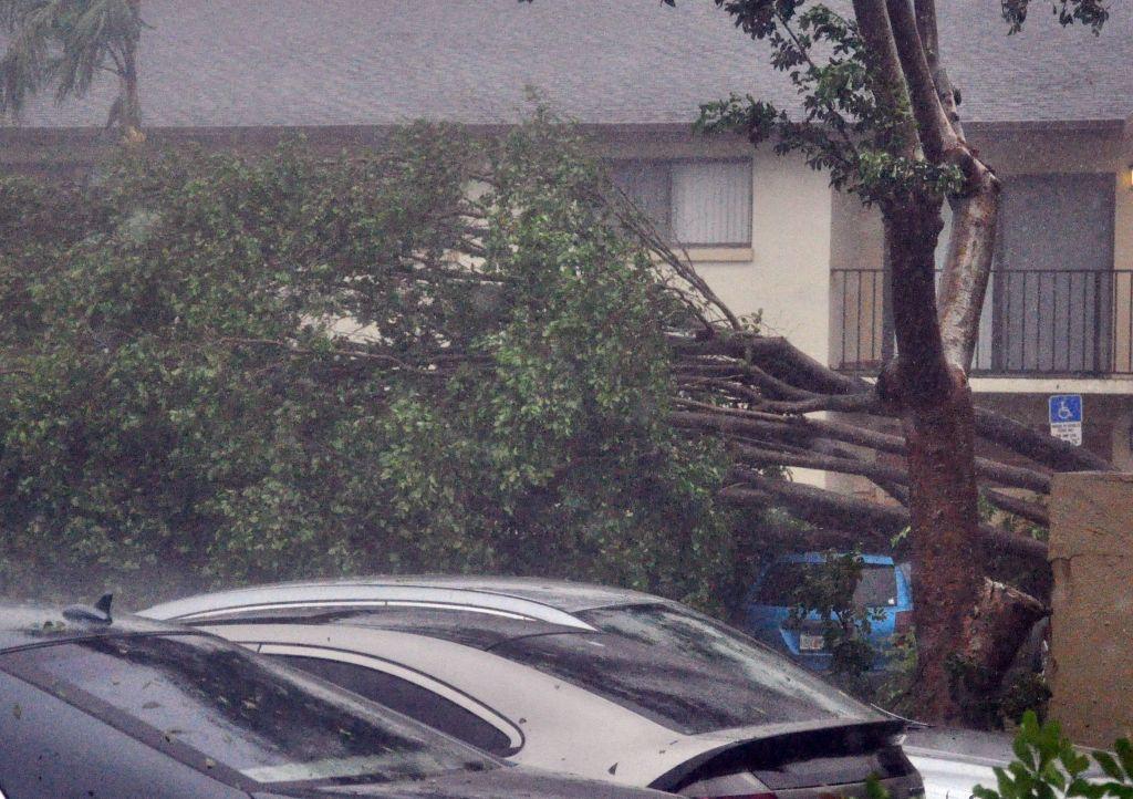 9月10日,颶風艾爾瑪(Irma)襲擊了佛羅里達州彭布羅克松樹(Pembroke Pines)地區,樹木被連根拔起。(MICHELE EVE SANDBERG/AFP/Getty Images)