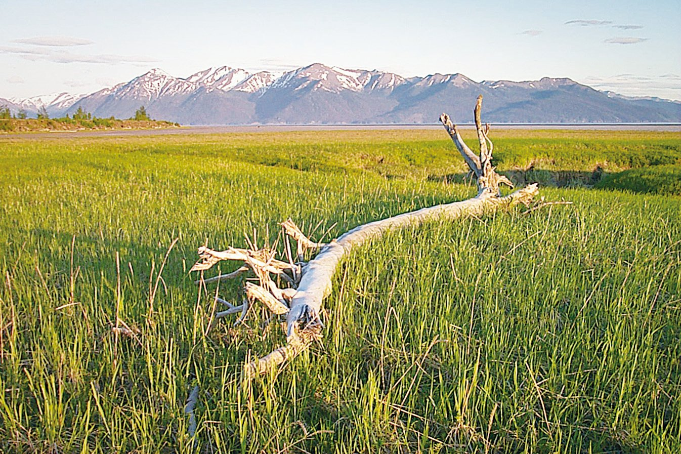 風口(Windy Point)的景色優美,一片蔥鬱的綠色。(網路圖片)