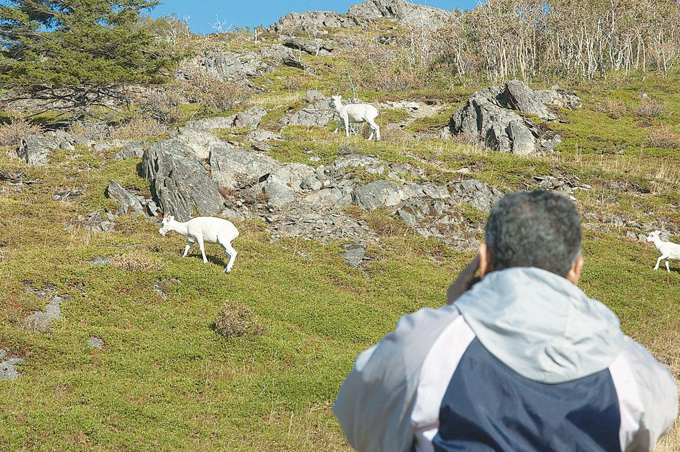 在風口(Windy Point)可以看到很多野生動物。(網路圖片)