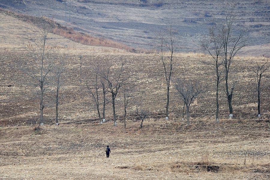 根據聯合國報告,平壤今年4到6月遭遇嚴重旱災,影響農作物收成,恐再次面臨糧食短缺問題。(FREDERIC J. BROWN/AFP/Getty Images)